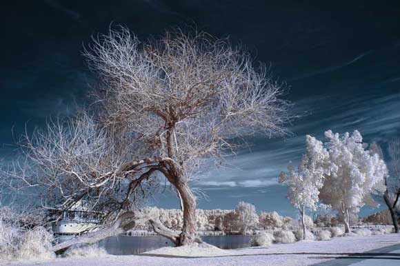 How-to-Shoot-Infrared-Photography