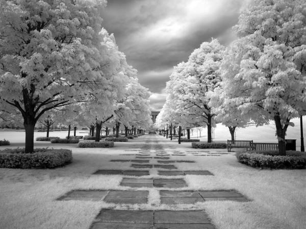 infrared-view-of-trees