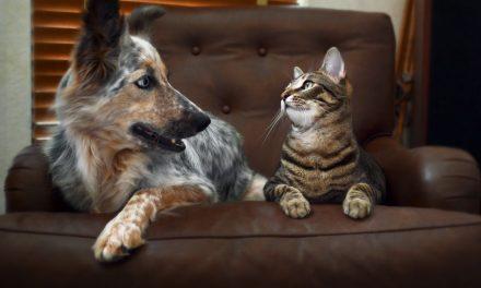 Dicas de móveis para quem tem animais em casa